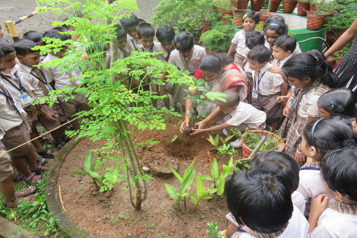 Jnanodaya Central School-Plantation