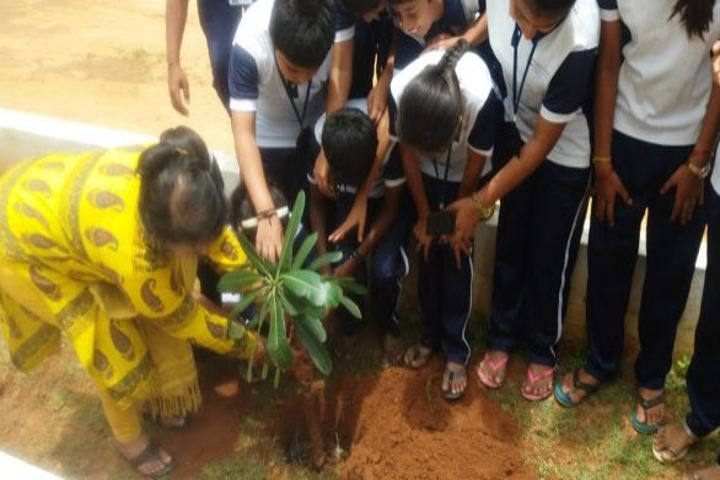 Sri Vivekananda International School-Tree Planting