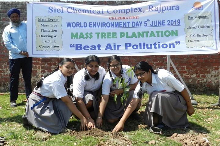 Holy Angels School - Tree Planting