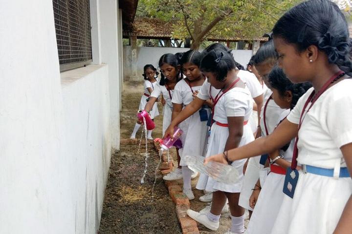 Doveton Girls Higher Secondary School-Tree Plantation