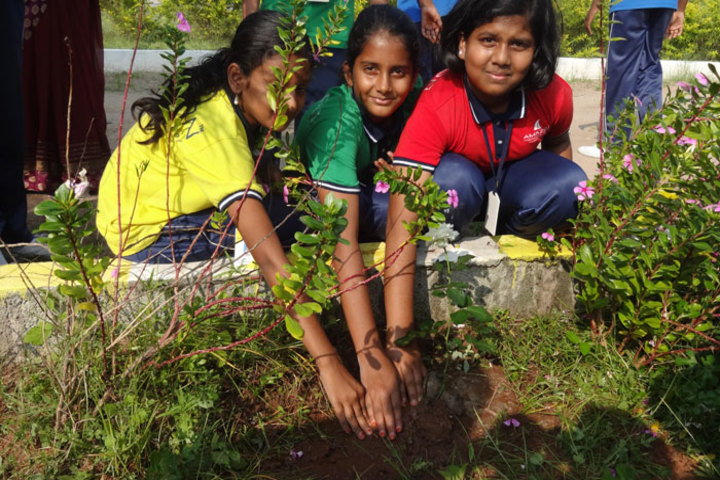 Amazon International School-Plantation