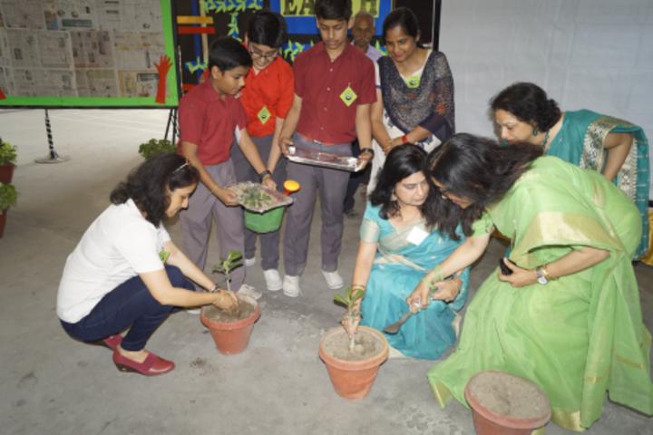 Sheiling House School-Tree Plantation