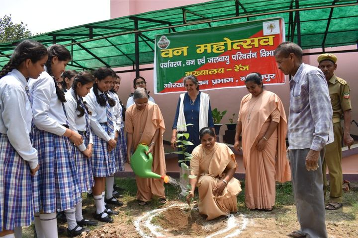 Carmel School-Tree Plantation