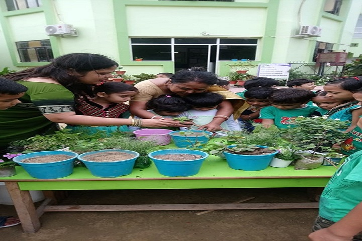 St XavierS Convent School-Trees Plantation