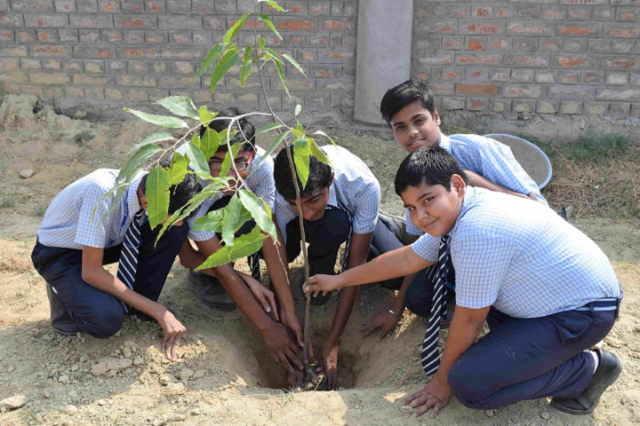 St Marys Convent School-Others plantation