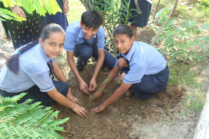 Jesus And Mary Convent School - Tree Planting
