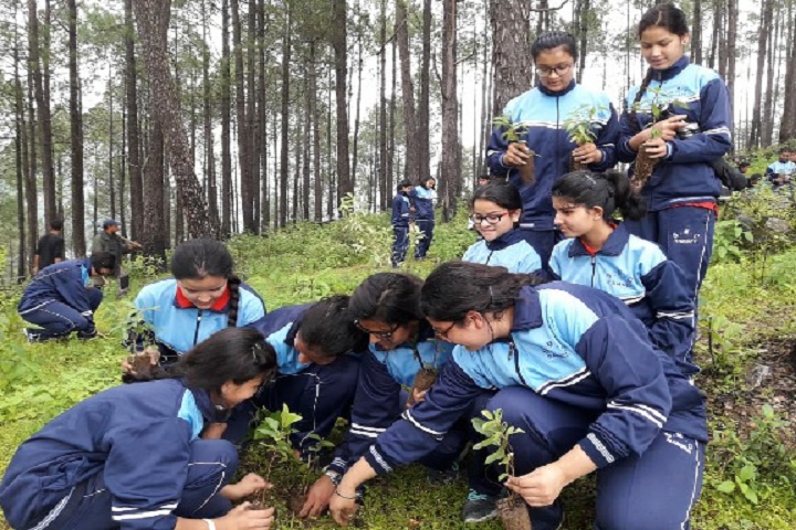 St Marys Convent College-Others plantation