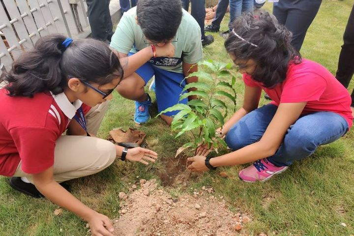 Vibgyor High School-Tree Plantation