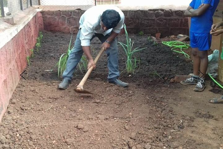 National Public School-Tree Plantation