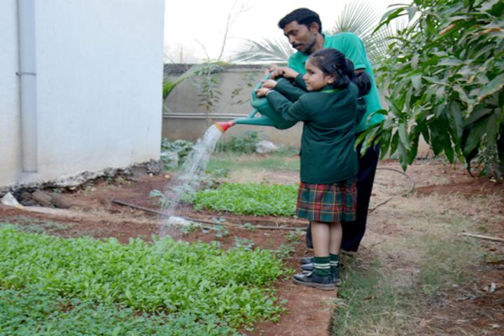 Ira Global School-Environment Activity