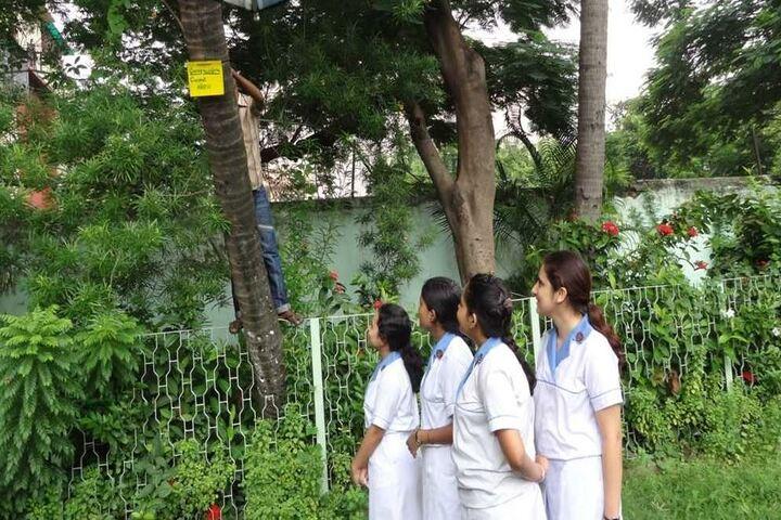 St Johns Diocesan Girls Higher Secondary School-Garden