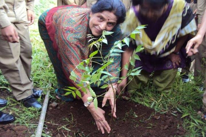 Holy Cross Convent High School-Tree Plantation