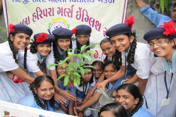 CGSMVM Ambaba Haripara Girls English School-Plantation
