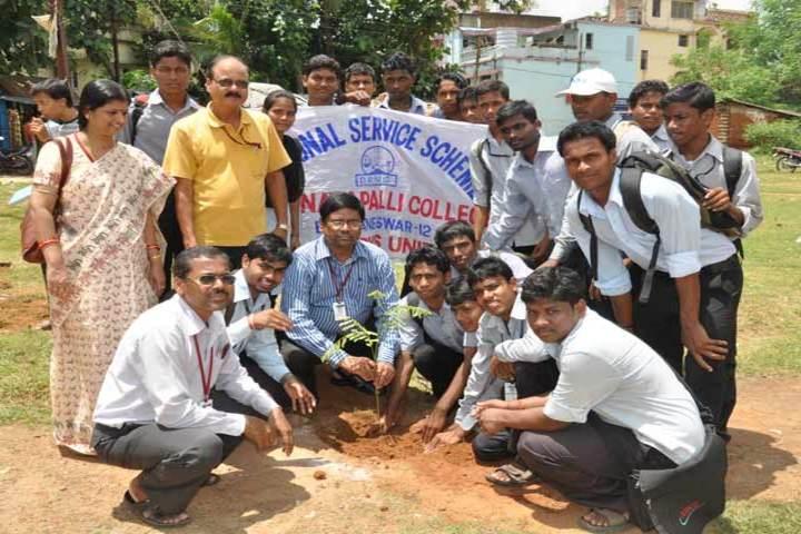 D R Nayapalli College-Plantation