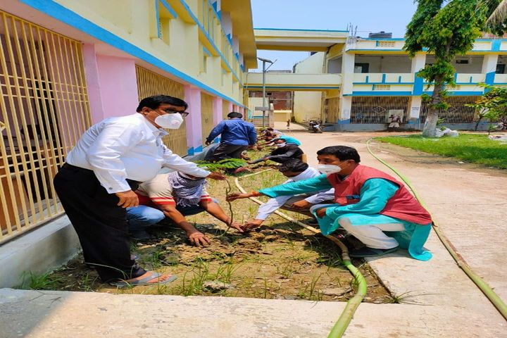 Kunwar Singh College-Tree Plantation