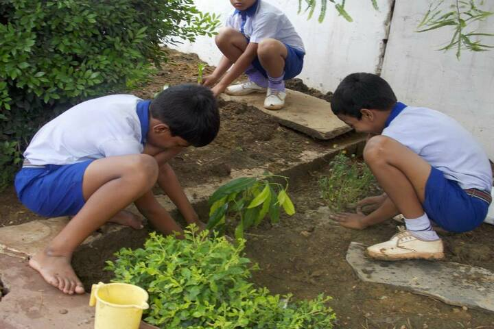 National Convent School-tree plantation