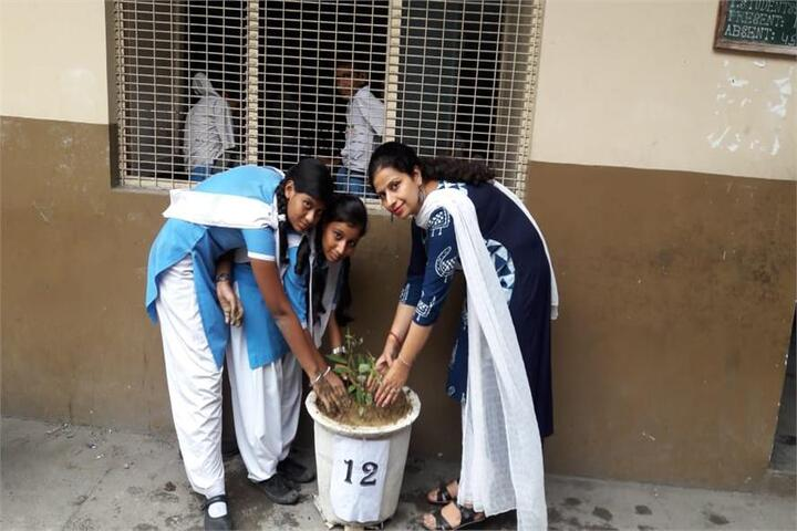 Arwachin Bharti Bhavan Senior Secondary School-Plantation