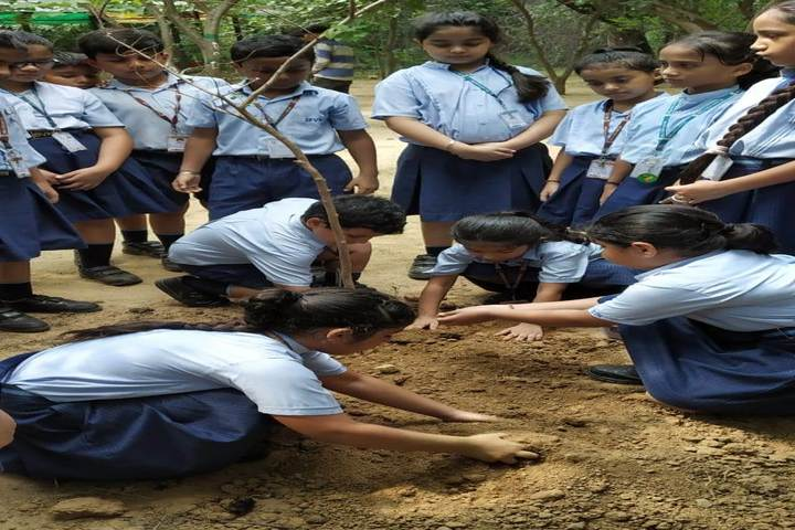 Birla Vidya Niketan-Tree Plantation