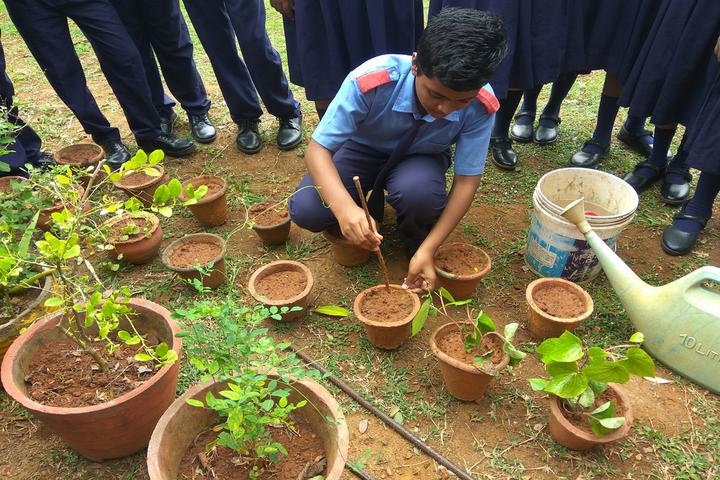 Little Angels School-Tree Plant