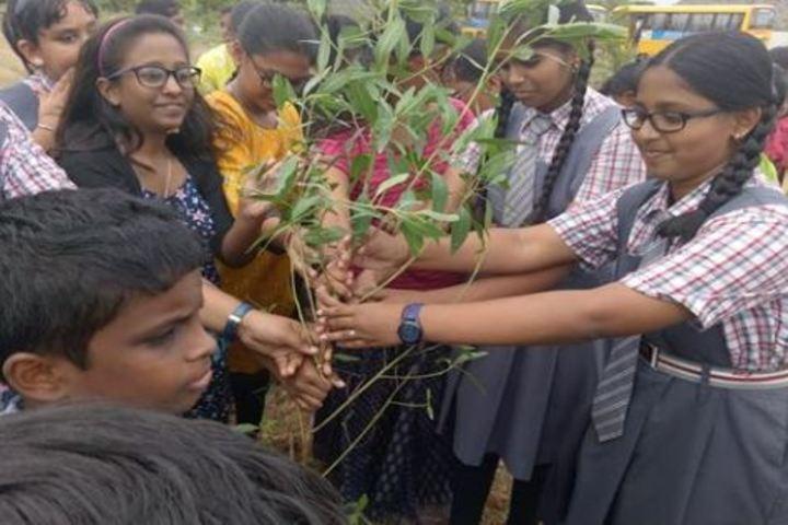 Ridge School-Tree Plant