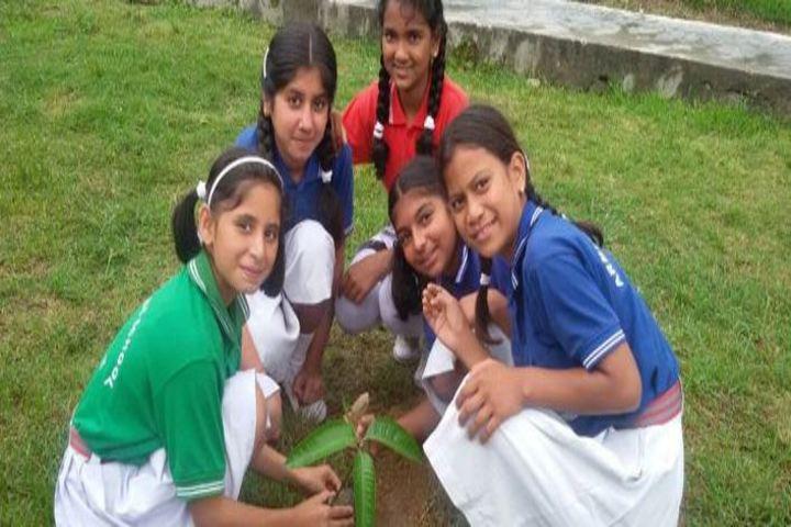 Army Public School-Plantation