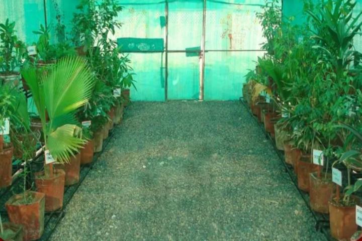 Army Public School-Green house