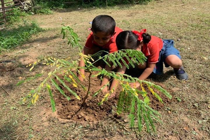 Shanti Asiatic School-Tree Plantation