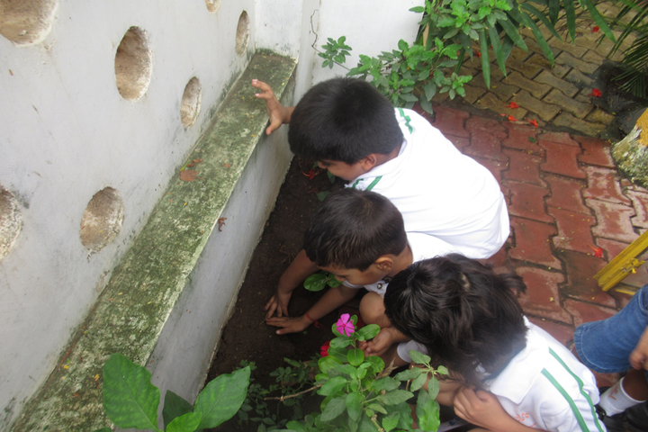 Vrajbhoomi International School-Tree Plantation