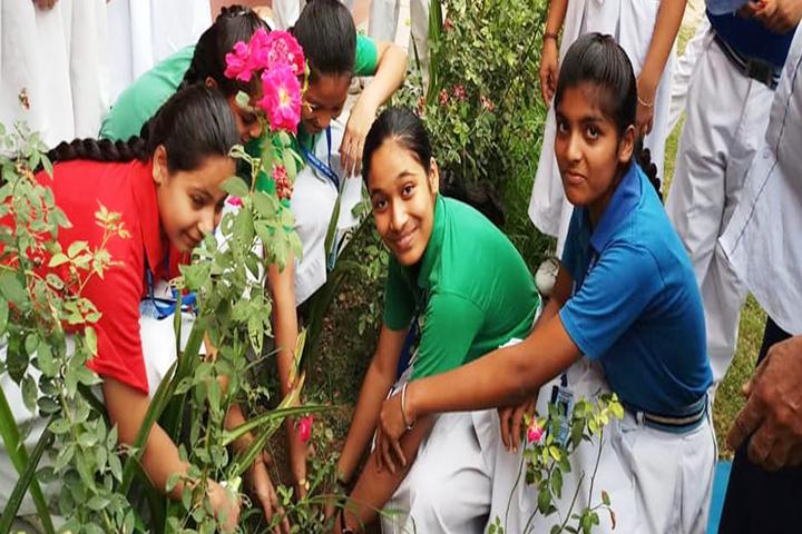 Shri Krishna Paranami Public School-Tree Plantation