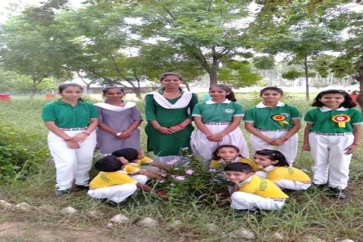 Vidhya Bharti Day Boarding Public School-Tree Plant