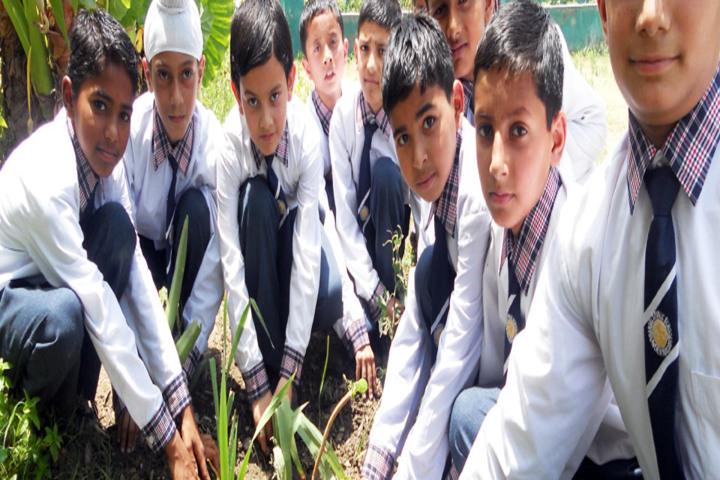 Angels Public School-Planting Tree