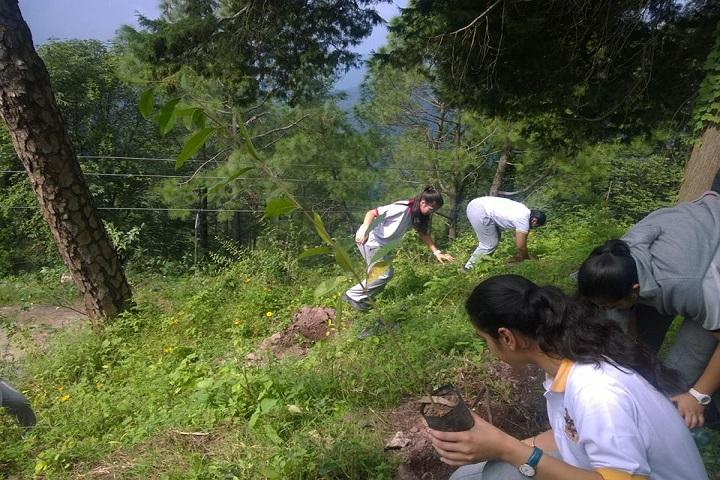 The Lawrence School-Tree Plantation