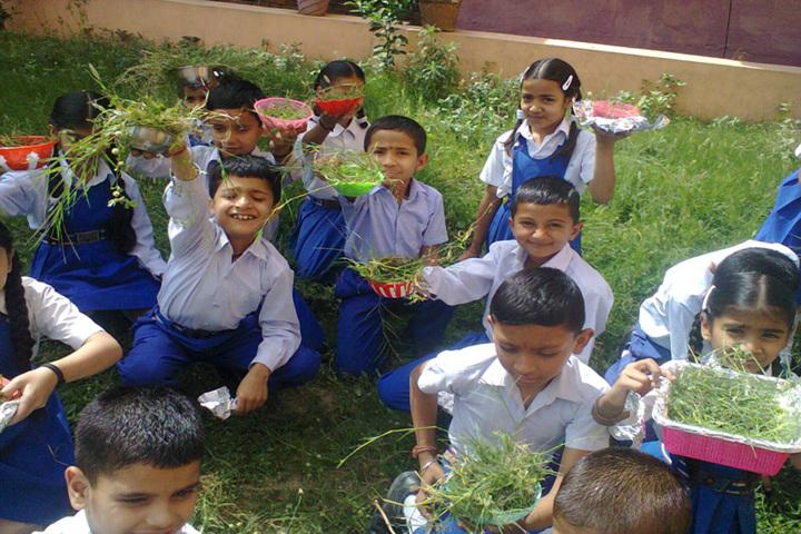 Brahmrishi Bawra Shanti Vidyapeeth School-plant day