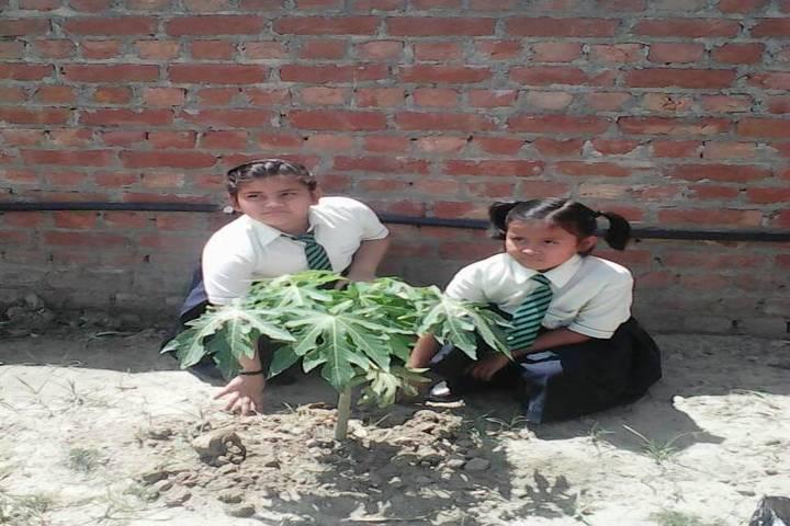 Indian Public School-Plantation