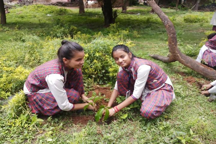 D A V Public School-Tree Plant