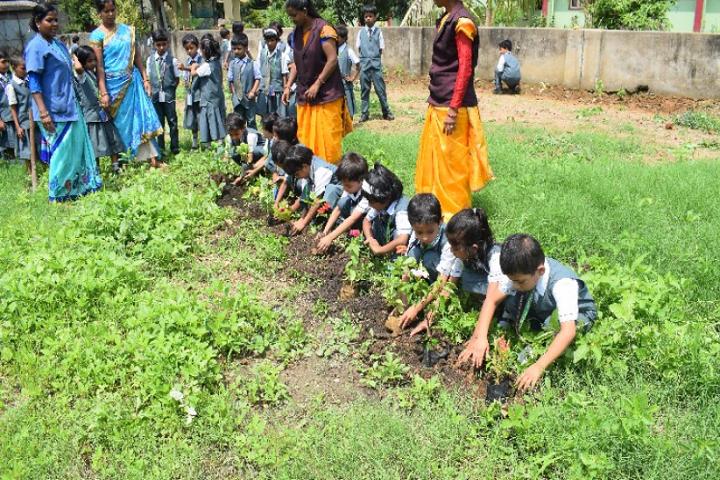 Holy Cross School-Tree Plantation