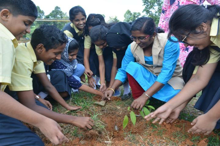 Alfeen Public School-Activity