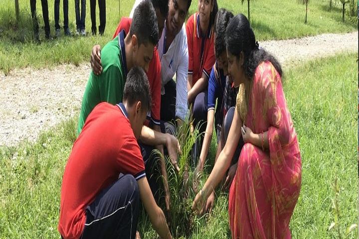 Kendriya Vidyalaya-Plants