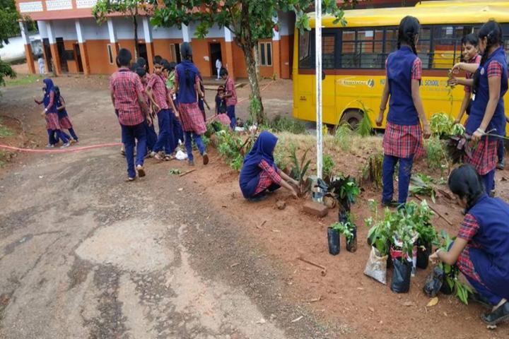 Kottappuram Central School-Tree Plantation