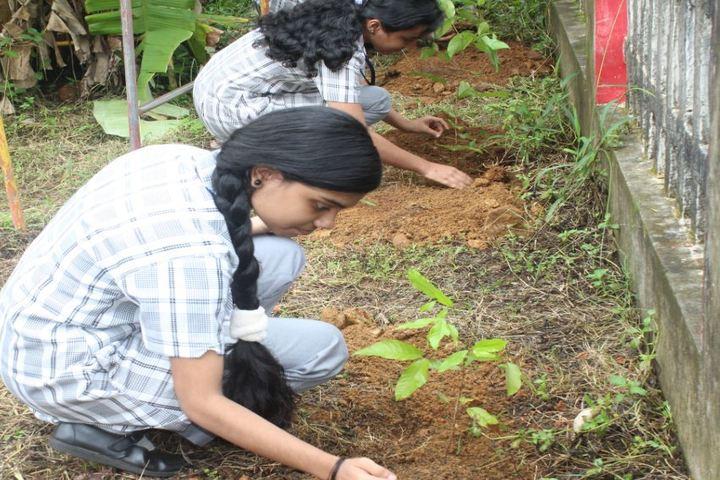 St Thomas Public School-Tree Plantation
